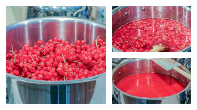 Making red currant jelly