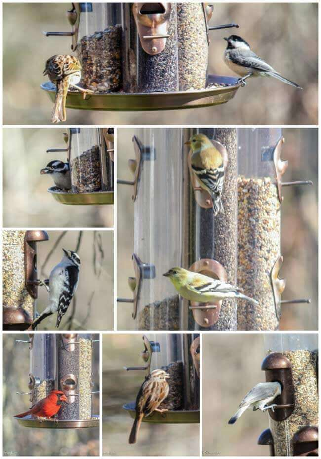 birds at my bird feeder in winter